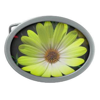 African Daisy Fluorescent Yellow Belt Buckle