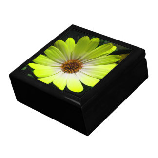 African Daisy Fluorescent Yellow Gift Box