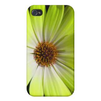 African Daisy Fluorescent Yellow  iPhone 4/4S Cover