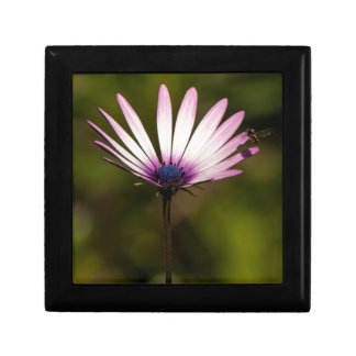 African Daisy Gift Boxes