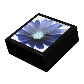 African Daisy Glowing Blue Gift Box