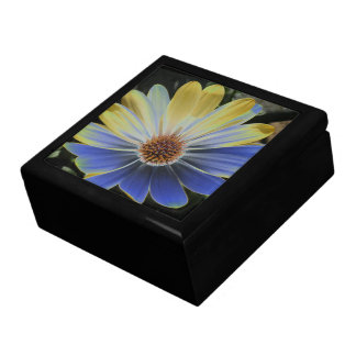 African Daisy Lapis and Gold Gift Box