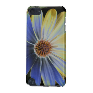 African Daisy Lapis and Gold  iPod Touch (5th Generation) Case
