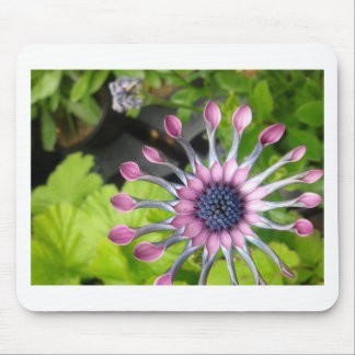 African daisy mouse pad