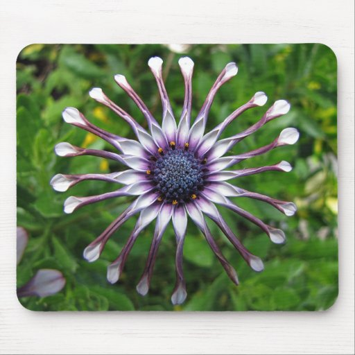 African daisy mouse pads