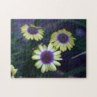 African Daisy, Puzzle. Jigsaw Puzzle