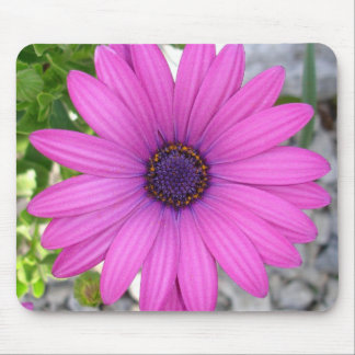 African Daisy (Square) Mouse Pad