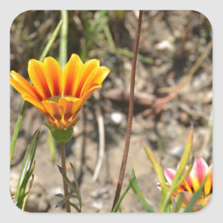 African Daisy Square Sticker