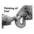African Elephant and Calf Postcard