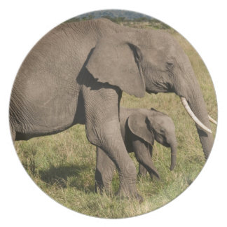 African Elephant and cub (Loxodonta africana), Plate