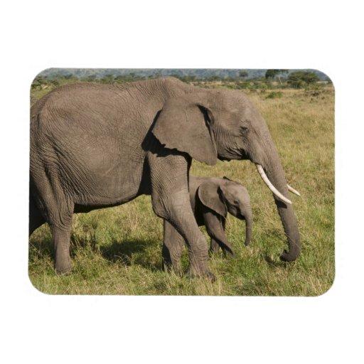 African Elephant and cub (Loxodonta africana), Flexible Magnet