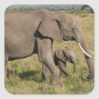 African Elephant and cub (Loxodonta africana), Square Sticker