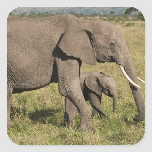 African Elephant and cub (Loxodonta africana), Stickers