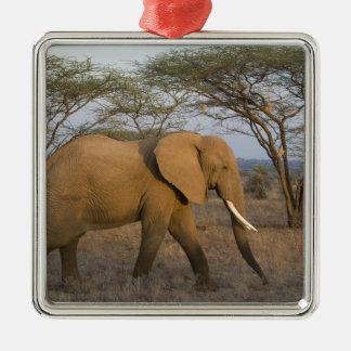 African Elephant at Samburu NP, Kenya. Silver-Colored Square Decoration