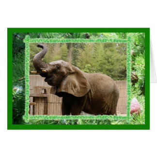 African Elephant Christmas Greeting Card