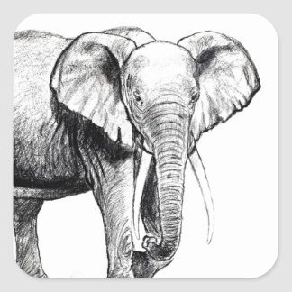 African elephant drawing square stickers