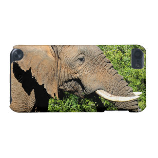 African Elephant eating iPod Touch (5th Generation) Cover