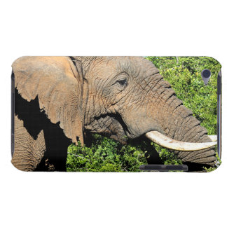 African Elephant eating iPod Touch Case