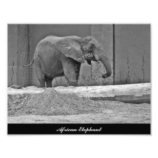 African Elephant Eating Photo