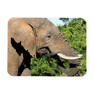 African Elephant eating Rectangle Magnet