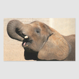 African elephant eats rectangular sticker