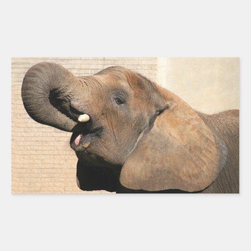 African elephant eats sticker