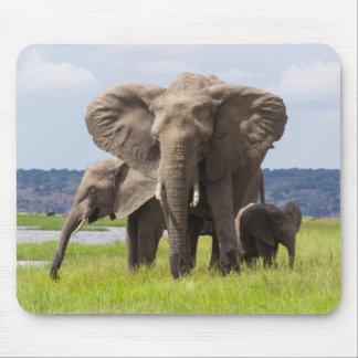 African Elephant Family, Botswana, Mousepad