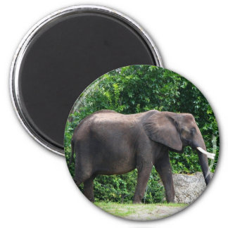 African Elephant Gifts 6 Cm Round Magnet