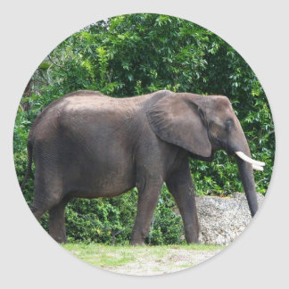 African Elephant Gifts Round Sticker