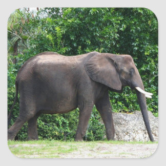 African Elephant Gifts Square Sticker
