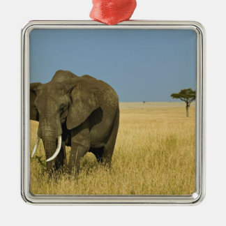African Elephant grazing in tall summer grass, Silver-Colored Square Decoration