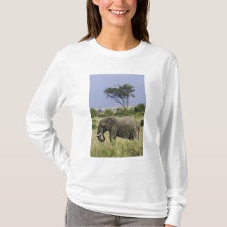 African Elephant grazing, Loxodonta africana, T-Shirt
