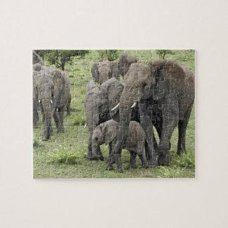 African Elephant herd, Loxodonta africana, 2 Jigsaw Puzzle
