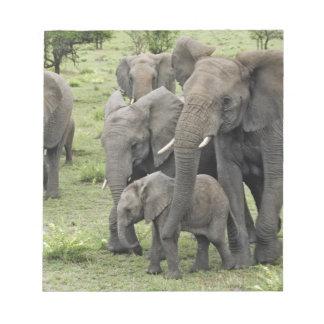 African Elephant herd, Loxodonta africana, 2 Notepad