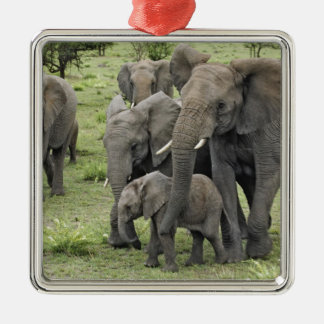 African Elephant herd, Loxodonta africana, 2 Silver-Colored Square Decoration