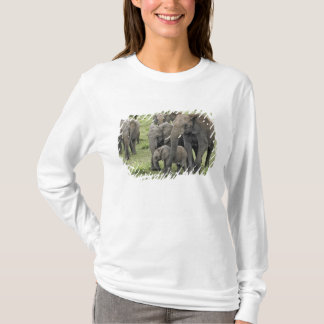 African Elephant herd, Loxodonta africana, 2 T-Shirt