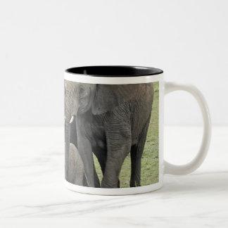 African Elephant herd, Loxodonta africana, 2 Two-Tone Coffee Mug
