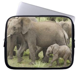 African Elephant herd, Loxodonta africana, 3 Laptop Sleeve