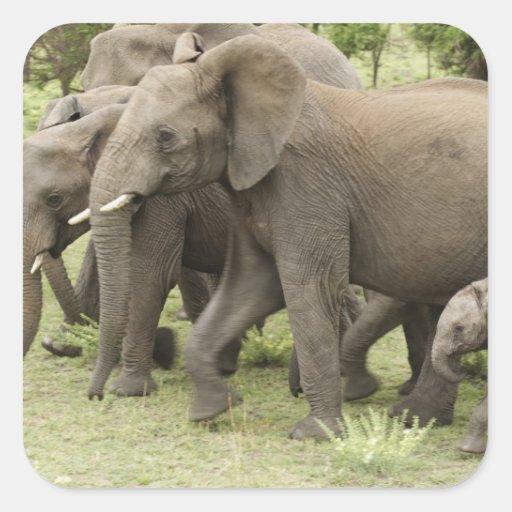 African Elephant herd, Loxodonta africana, 3 Sticker