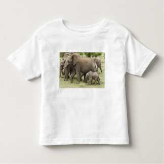African Elephant herd, Loxodonta africana, 3 Toddler T-Shirt