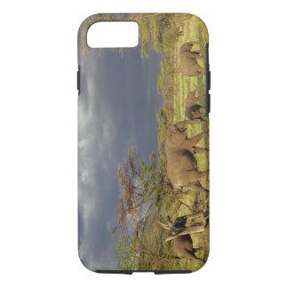 African Elephant herd, Loxodonta africana, iPhone 8/7 Case