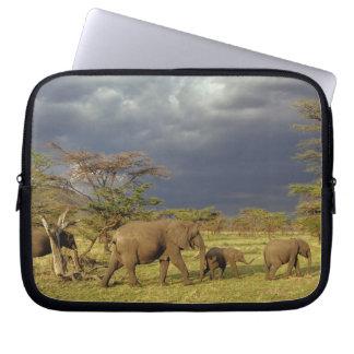 African Elephant herd, Loxodonta africana, Laptop Sleeve