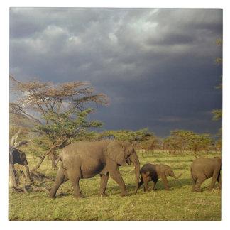 African Elephant herd, Loxodonta africana, Large Square Tile