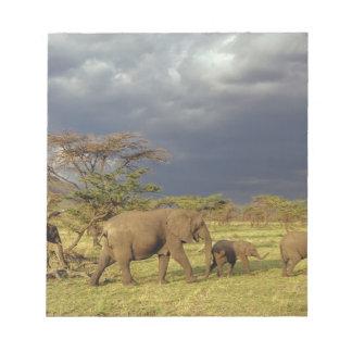 African Elephant herd, Loxodonta africana, Notepads