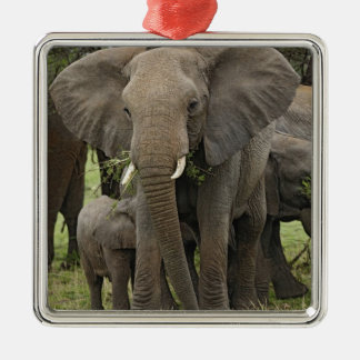 African Elephant herd, Loxodonta africana, Silver-Colored Square Decoration