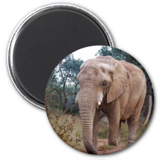 African elephant in the bush magnet