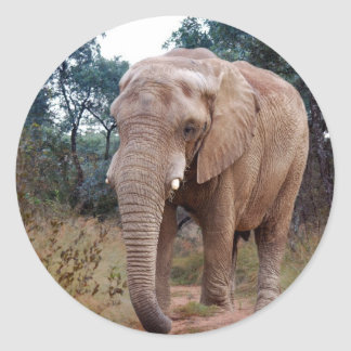 African elephant in the bush round sticker
