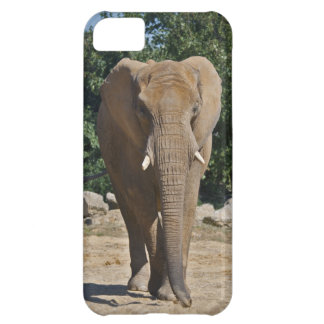 African Elephant iPhone 5 Case