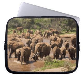 African Elephant, Loxodonta africana, crossing Laptop Sleeve