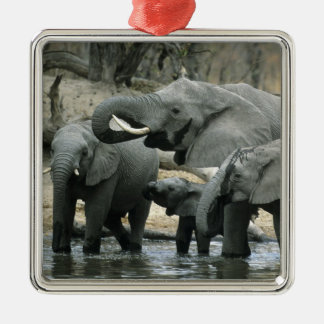 African Elephant, (Loxodonta africana), drinking Christmas Ornament